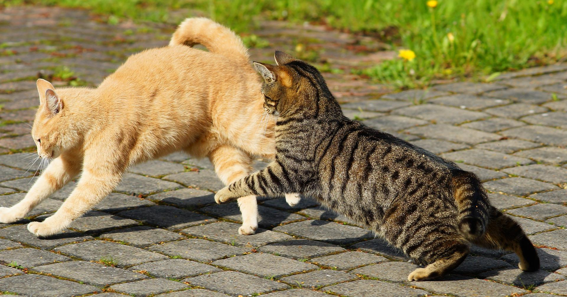 chats nuisibles